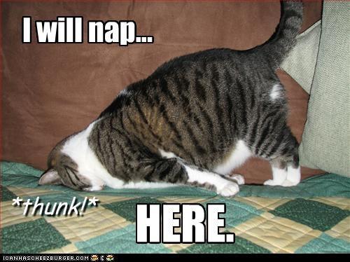 nap sleepy - 2399123712