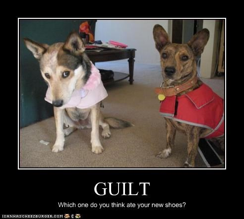 GUILT Which one do you think ate your new shoes?