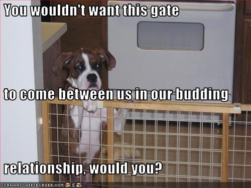 boxer,gate,kitchen,relationship,trapped