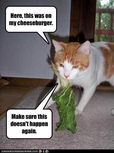 Cheezburger Image 2400473856