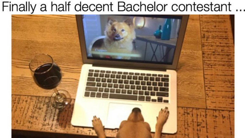 Collection of funny memes involving dogs, dating, alcohol, the internet, food, work, relationships, tv, the bachelor, sex.