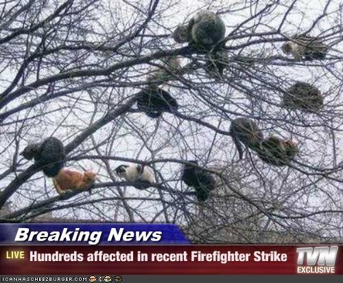 fireman,news,stuck,trees