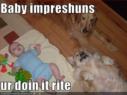 baby,doin it rite,golden retriever,human,impression