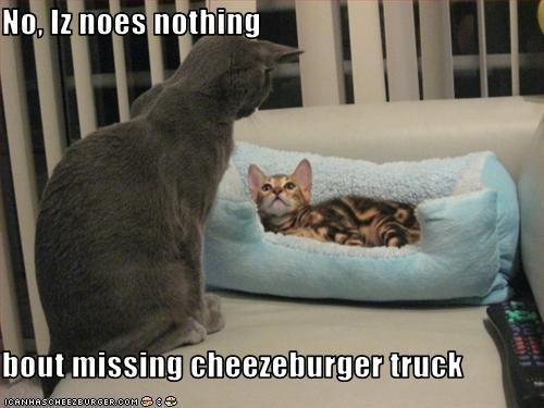Cheezburger Image 2405192448