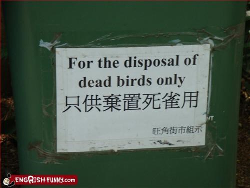 birds,dead,disposal,dumpster,g rated,only,trash can