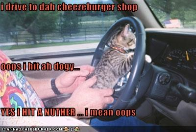 Cheezburger Image 2409584384