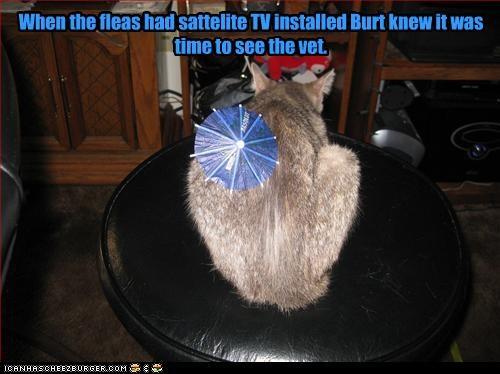 fleas sick TV vet w00t - 2411640064