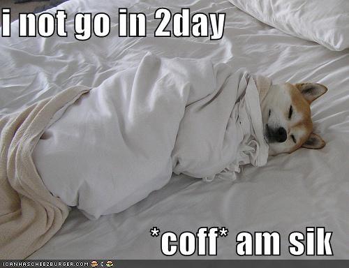 akita bed sick sleeping - 241246464