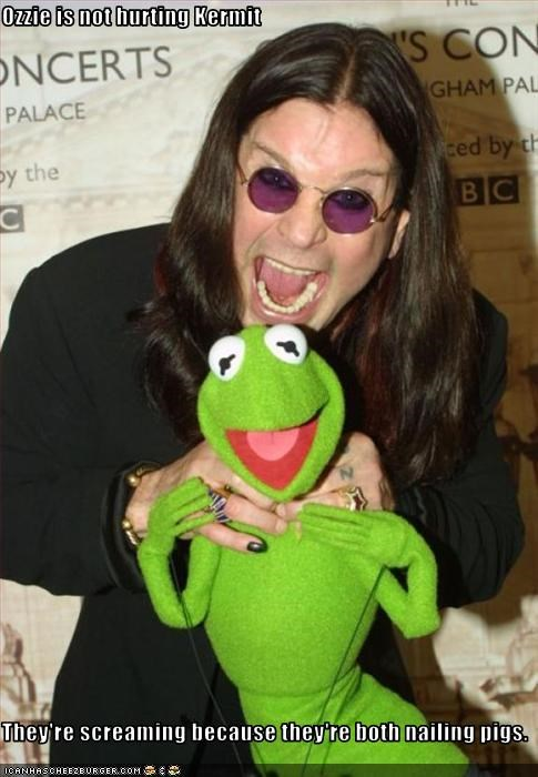 Ozzie is not hurting Kermit They're screaming because they're both