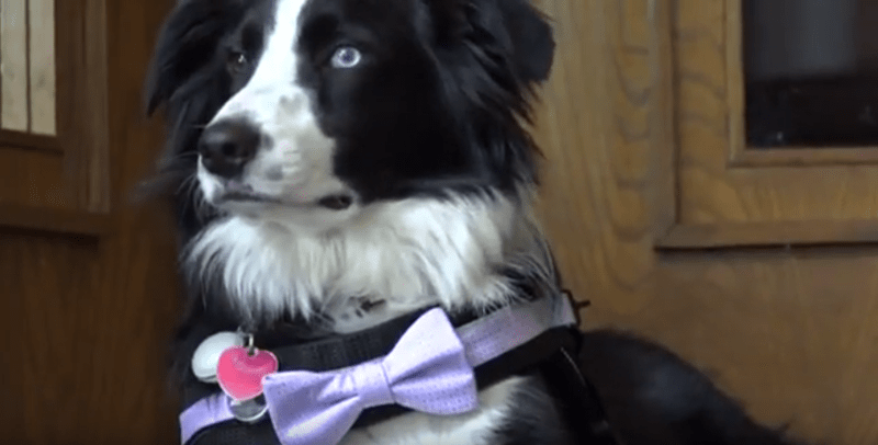 The story of a puppy trained to become the first Funeral therapy dog in Texas