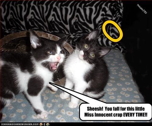 cute halo innocent kitten w00t