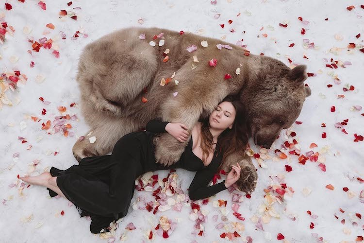 Series of fairy tale like photos using real wild life animals - cover image of woman cuddling with a grizzly bear.