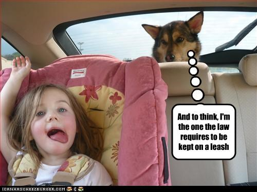 car,child,crazy,human,laws,leash,whatbreed
