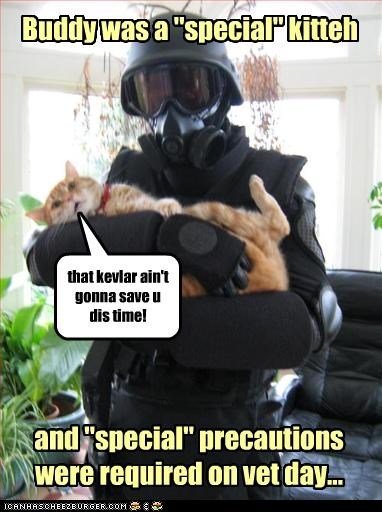 """Buddy was a """"special"""" kitteh and """"special"""" precautions were required on vet day... that kevlar ain't gonna save u dis time!"""
