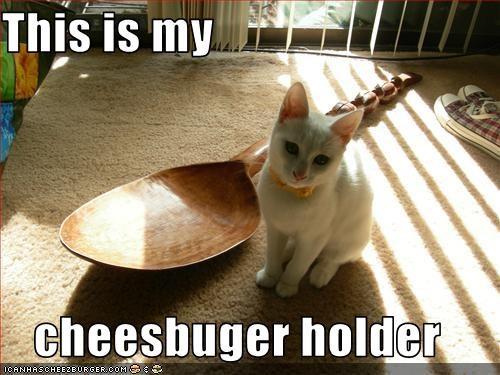 Cheezburger Image 2414785280
