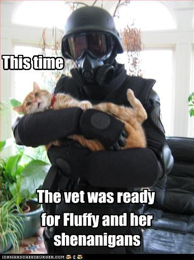 This time The vet was ready for Fluffy and her shenanigans