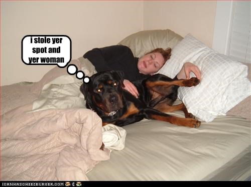 bed,human,rottweiler,spots,stole,thief,woman