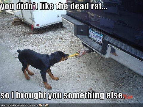 car fetch present rottweiler truck - 2415400704