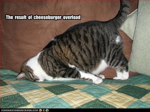Cheezburger Image 2416766208
