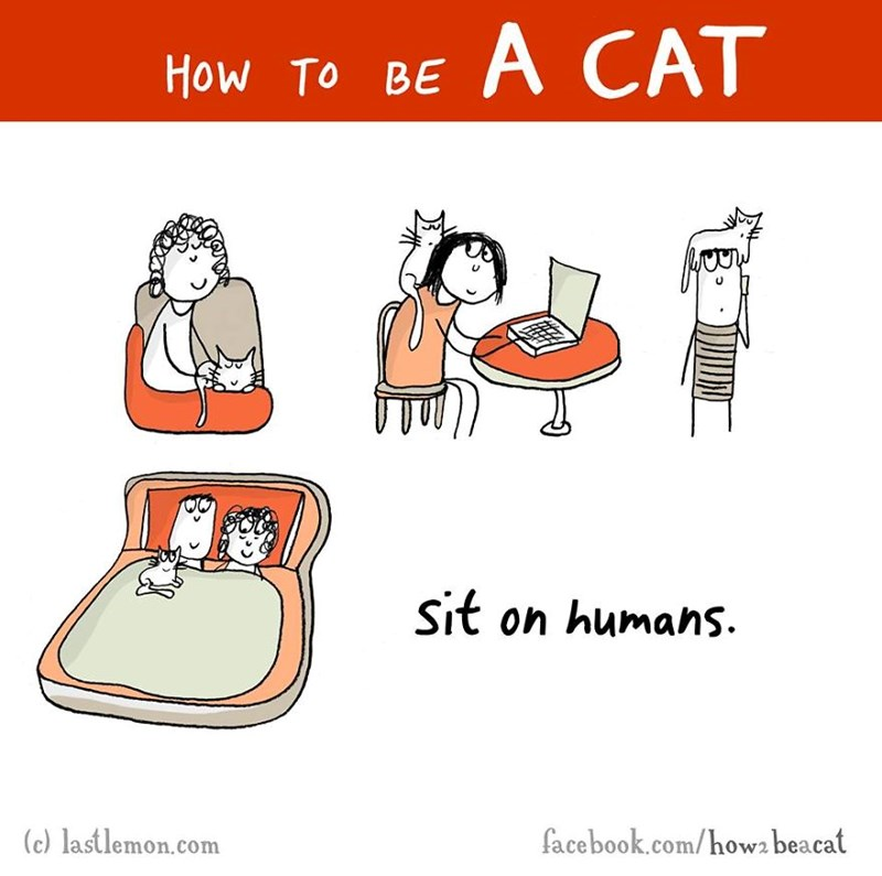 Funny comic of learning what cats do - a cover photo for how to be a cat and a list of funny comics and gifs