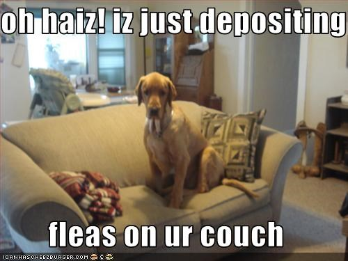 oh haiz! iz just depositing  fleas on ur couch