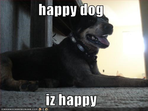 happy dog   iz happy