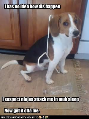beagle clothes hanger FAIL help ninja sleep stuck - 2419136256