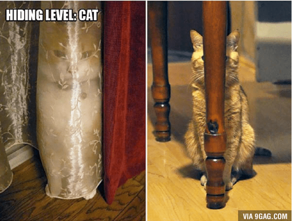 A photo of a cat that has mastered the art of hiding... but not really- cover photo for cat logic