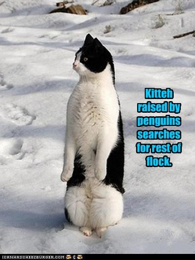Kitteh raised by penguins searches for rest of flock.