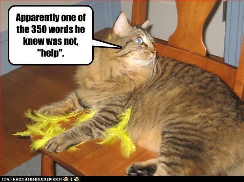 bird halp murder nom nom nom - 2426478848