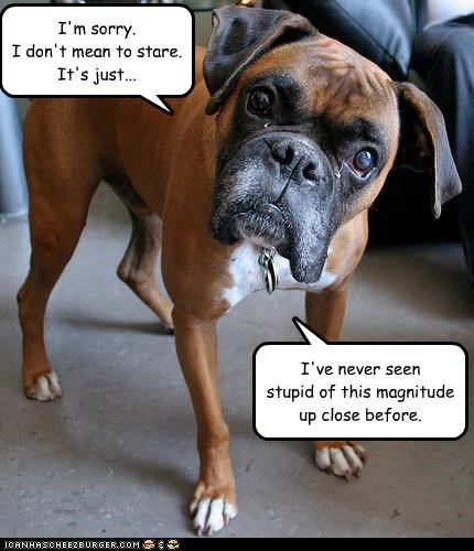 boxer sorry Staring stupid - 2429215488