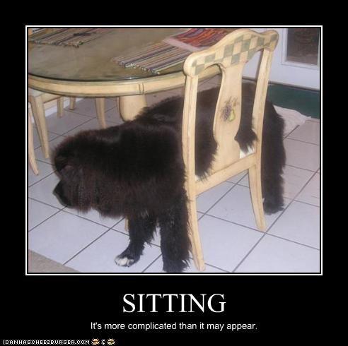 chair FAIL newfoundland sitting
