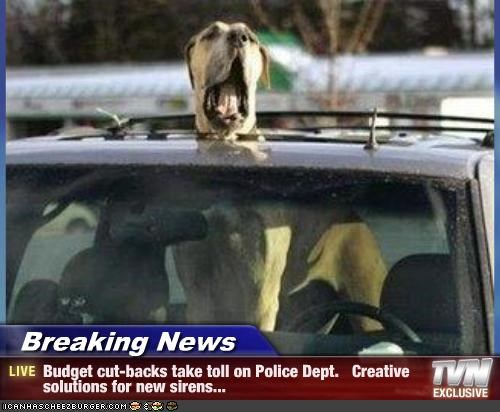 great dane,police,siren