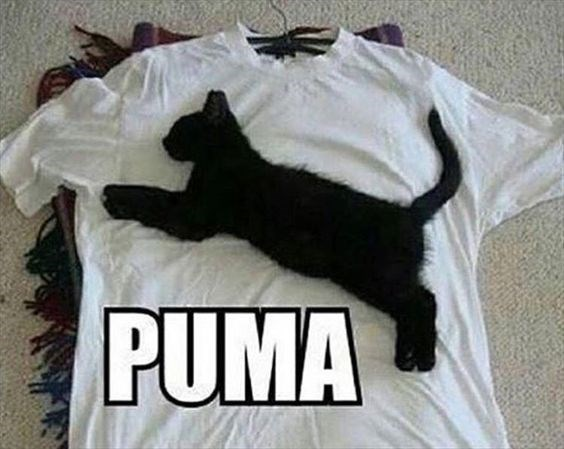 a picture of a black kitten lying on a white shirt says puma - cover photo for a list of funny animal pictures