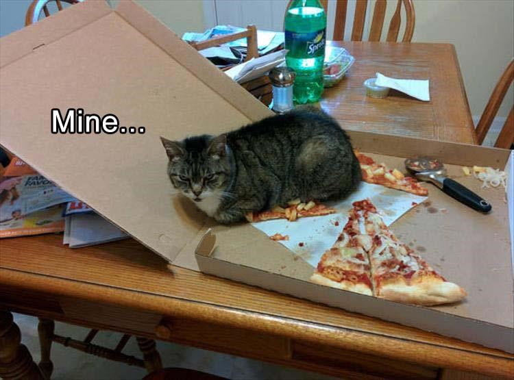 A cat sitting on a slice of pizza - cover photo for a list of the best and newest cat memes this tuesday