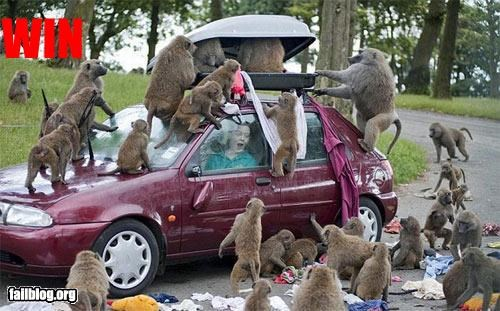 attack,baboons,car,clothing,g rated,win