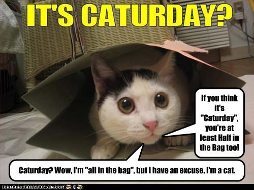 """Caturday? Wow, I'm """"all in the bag"""", but I have an excuse, I'm a cat. If you think it's """"Caturday"""", you're at least Half in the Bag too!"""