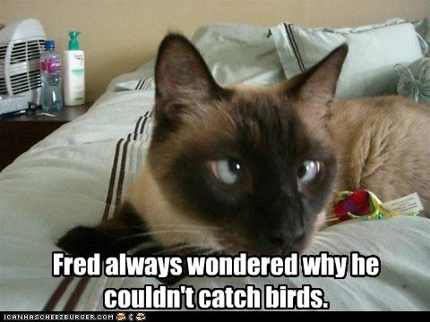 bird FAIL hunting - 2437774592