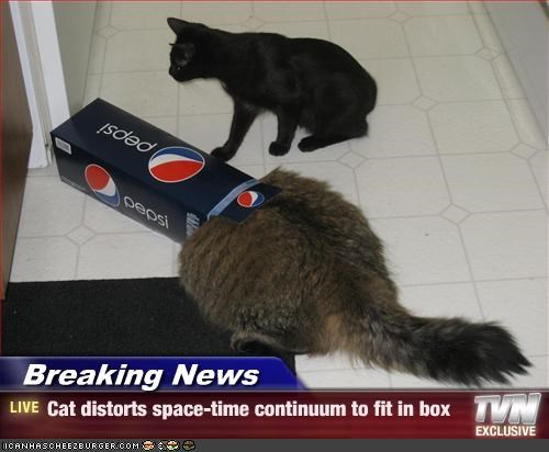 box,fat,news,space