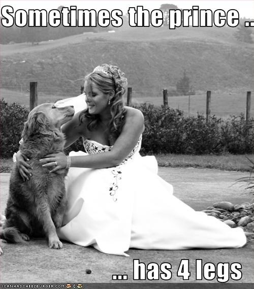 golden retriever prince wedding womans-best-friend