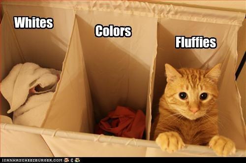 Fluffy,laundry,sortin