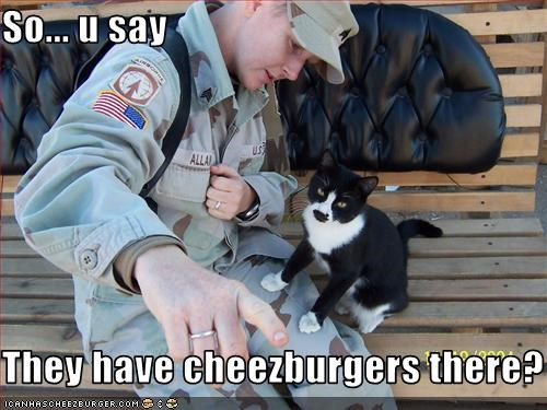 Cheezburger Image 2440022272
