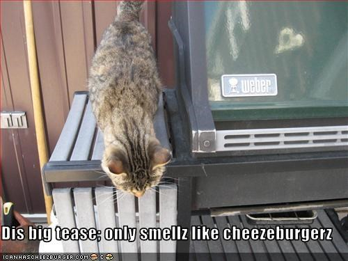 Cheezburger Image 2442377472