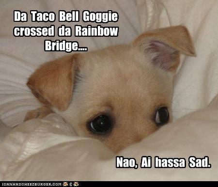 Cheezburger Image 2445720832