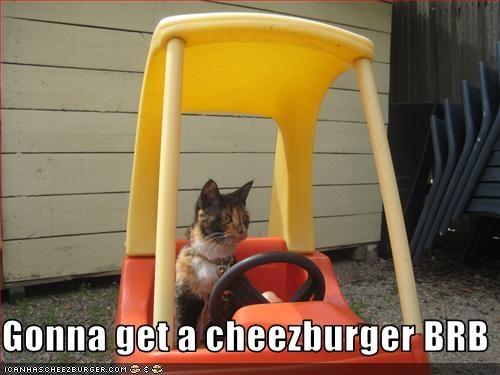 Cheezburger Image 2446612736