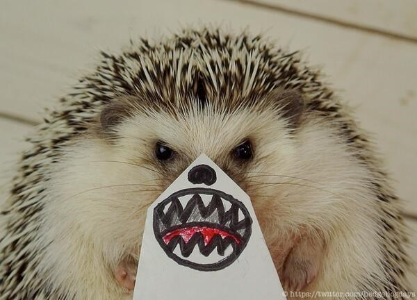 hedgehog making funny faces