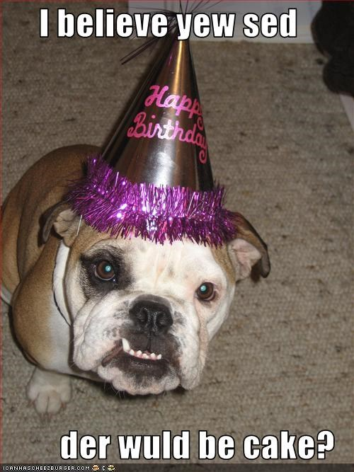 birthday,bulldog,cake,hat,Party