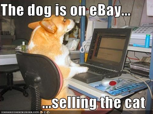 The Dog Is On Ebay Selling The Cat Cheezburger Funny Memes Funny Pictures