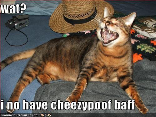 Cheezburger Image 2456252672