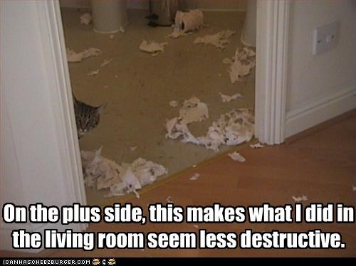 bad cat,destruction,mess